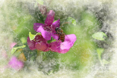 Photograph - Bee On Texas Ranger Blossom Antiqued And Aged by Colleen Cornelius
