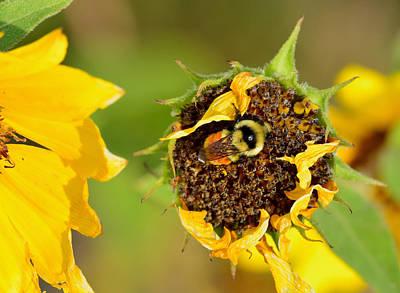 Photograph - Bee Sleeping At Work by Kae Cheatham