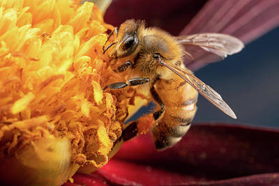 Photograph - Bee Work by Brian Hale