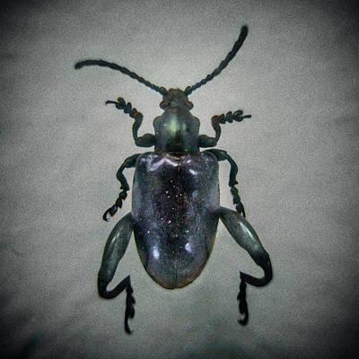 Photograph - Beetle Macro by Con Ryan