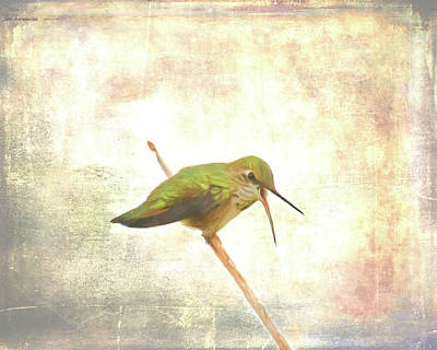Photograph - Begging Hummingbird II by Jennifer Grossnickle