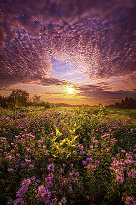 Photograph - Beginnings by Phil Koch
