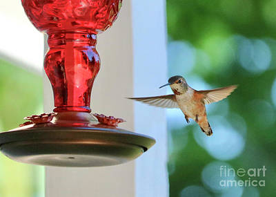 Photograph - Bejeweled Hummingbird by Carol Groenen