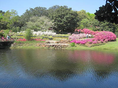 Photograph - Bellingrath in Spring by Peggy M McAloon