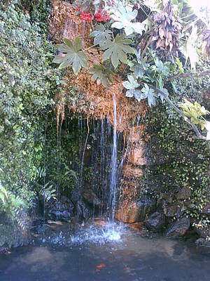 Photograph - Bellingrath Waterfall by Peggy M McAloon
