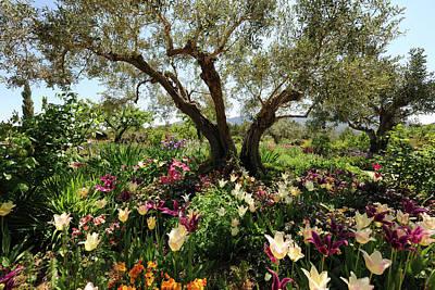 Beneath The Olive Tree, Marnes, Spain Art Print by Josie Elias
