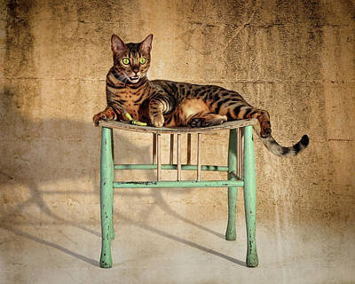 Photograph - Bengal On His Throne by Wes and Dotty Weber