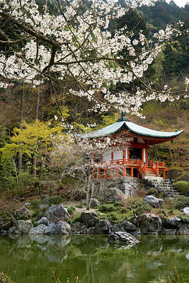 Photograph - Bentendo Temple And Cherry Blossoms by Akira Kaede