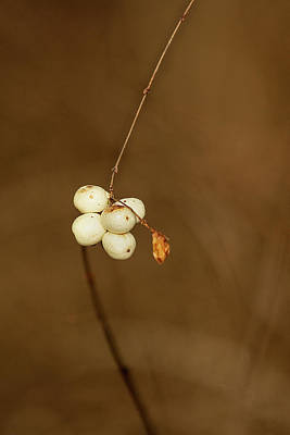 Photograph - Berries by Bob Cournoyer