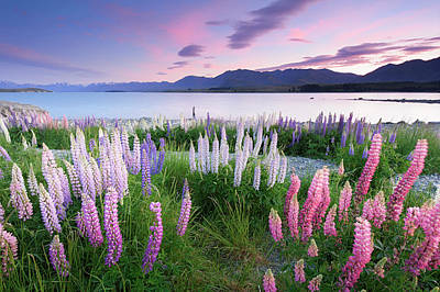 Photograph - Berry Dawn At Lake Tekapo, New Zealand by Atomiczen
