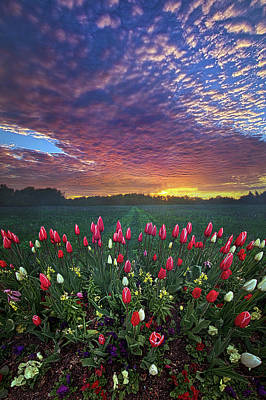 Photograph - Beyond All Else by Phil Koch
