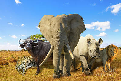 Photograph - Big Five Composition by Benny Marty