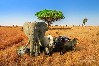 Photograph - Big Five Safari by Benny Marty