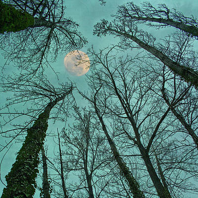 Photograph - Big Moon Over The Trees by Núria Talavera