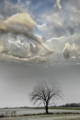 Photograph - Big Sky One Tree by Evie Carrier