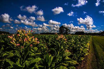 Photograph - Big Sky Tobacco  by John Harding