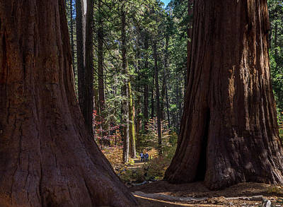 Photograph - Big Trees, Little People by Martin Gollery