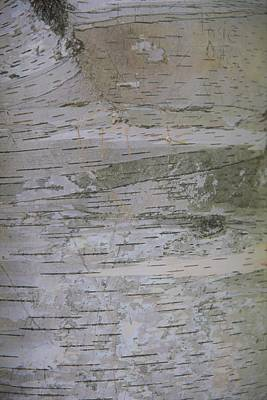 Photograph - Birch Bark by Lisa Dunn