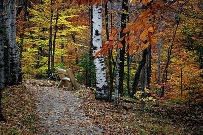 Photograph - Birch Bench by David Heilman