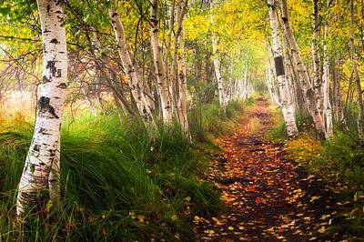 Photograph - Birch Path by Kim Carpentier