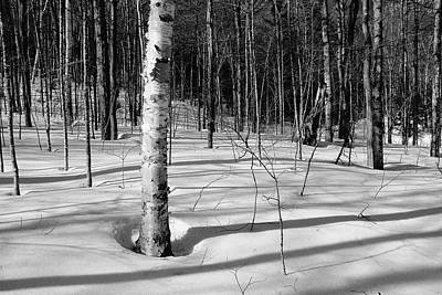 Photograph - Birch Shadow. by Jeff Sinon