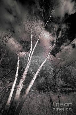 Edward Hopper - Birch Trees by Bill Frische