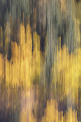 Birch Trees In The Fall  Art Print by K Pegg