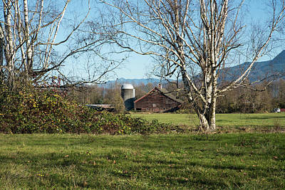 Photograph - Birch Trees Silo And Old Barn  by Tom Cochran