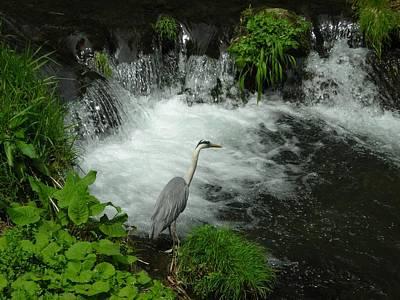 Photograph - Bird Along A River by Tomomi Nakagawa