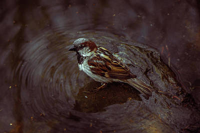 Photograph - Bird Bath by Traci Asaurus