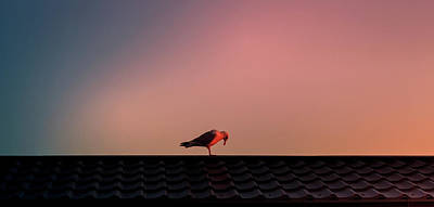 Photograph - Bird Bows To Sunrise by Mike Molloy Photo