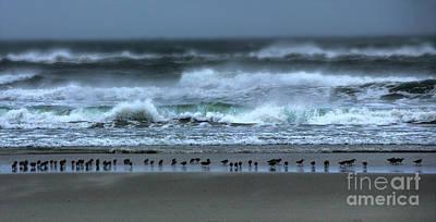Photograph - Bird Line In The Surf Line by Dan Carmichael