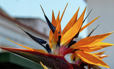 Travel - Bird of Paradise by Marcy Wielfaert