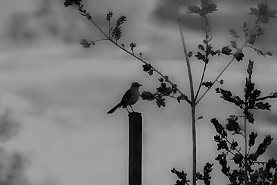 Photograph - Bird On A Post by Alison Frank