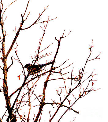 Photograph - Bird On A Tree by Patricia Awapara