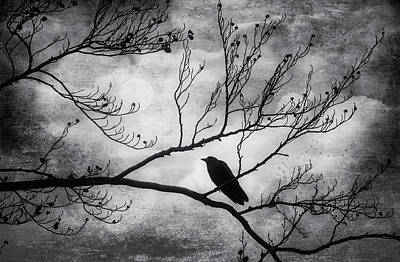 Photograph - Bird On Autumn Branches Black And White by Garry Gay