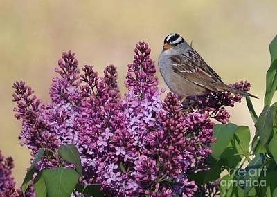 Photograph - Bird On Lilac Flowers by Carol Groenen