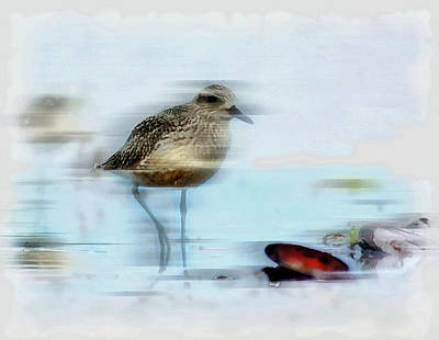 Kids Alphabet Royalty Free Images - Bird on the Shore Royalty-Free Image by Mario Carini