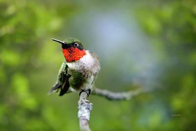Photograph - Bird Ruby Throated Hummingbird by Christina Rollo