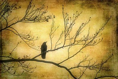 Photograph - Bird Silhouette by Garry Gay