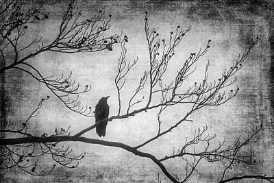 Photograph - Bird Silhouette In Black And White by Garry Gay