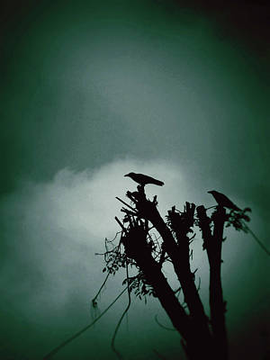 Bangalore Photograph - Bird Silhouette by Photography By Zeeshan