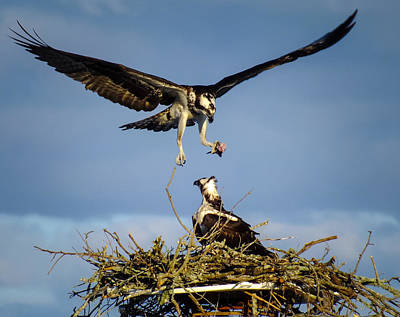 Photograph - Birding Instinct by Karen Wiles