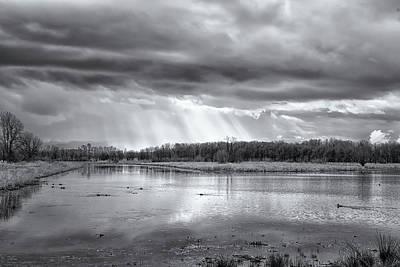 Photograph - Birdland - Ridgefield Bw by Belinda Greb
