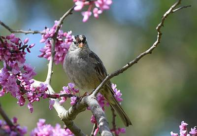 Photograph - Birds And Blossoms by Fraida Gutovich