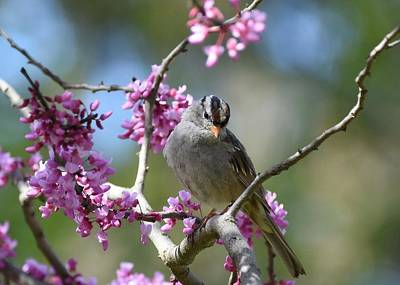 Photograph - Birds And Blossoms 2 by Fraida Gutovich
