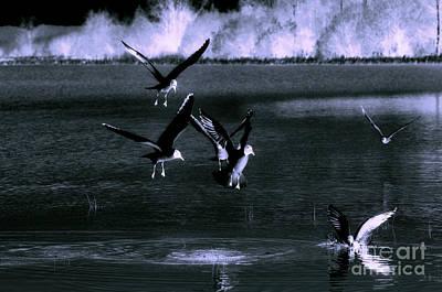 Bear Photography - Birds b/w by Esko Lindell