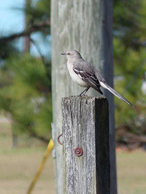 Photograph - Birds - Blending In by Matthew Seufer