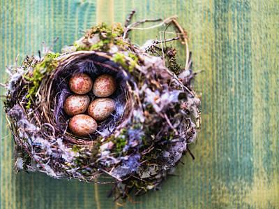 Photograph - Birds Nest With Eggs by Deimagine