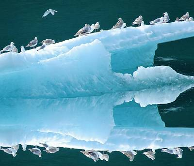 Photograph - Birds On Ice by Joan Stratton